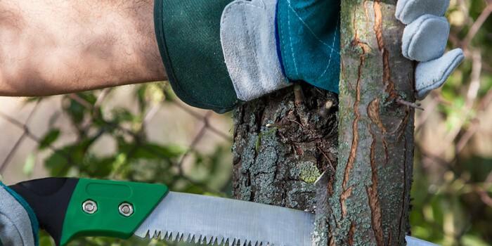 Baumbeschnitt mit Astsäge